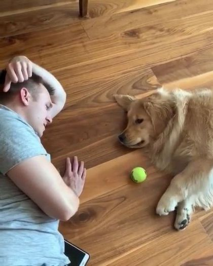 When it's too hot outside, you play lazy fetch at home - Video & GIFs | animals & pets,cute dogs,dog breeds,caring animals,apartment furniture