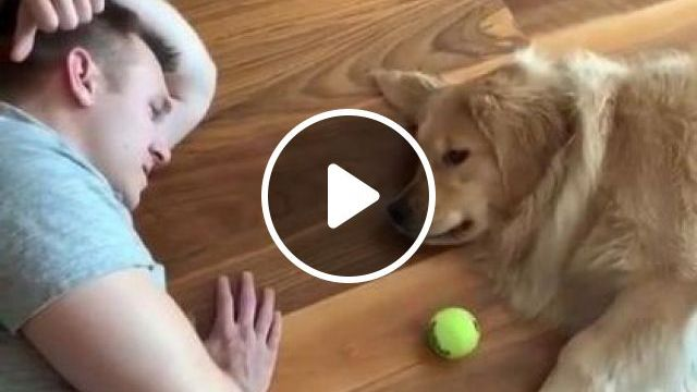 When It's Too Hot Outside, You Play Lazy Fetch At Home - Video & GIFs | animals & pets, cute dogs, dog breeds, caring animals, apartment furniture