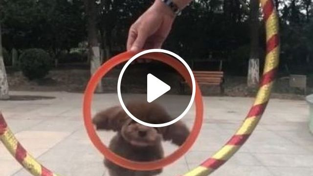 Wow So Amazing Cute Puppy's - Video & GIFs | animals & pets, cute dogs, caring animals, dog breeds