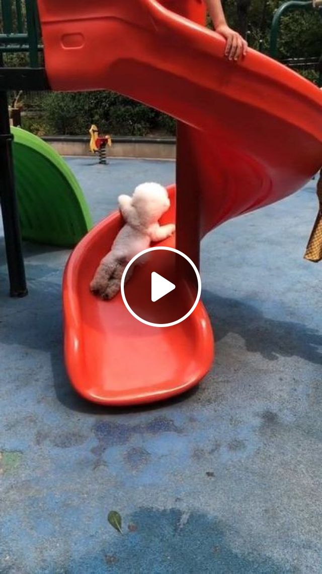 Cute Dog And Slide - Video & GIFs   animals & pets, dog breeds, caring animals, plastic slides