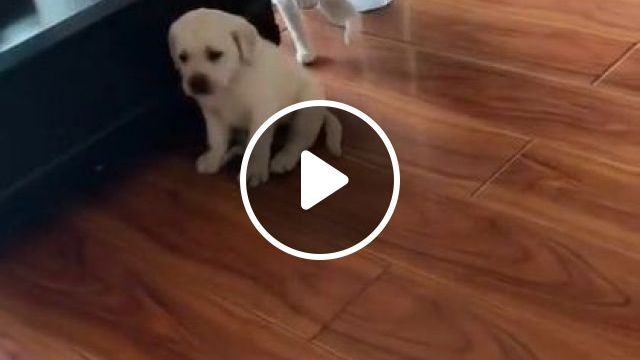 Dog ... who, not me, cat said - Funny Videos - funnylax.com - animals & pets,cute cats,dog breeds,caring animals,apartment furniture