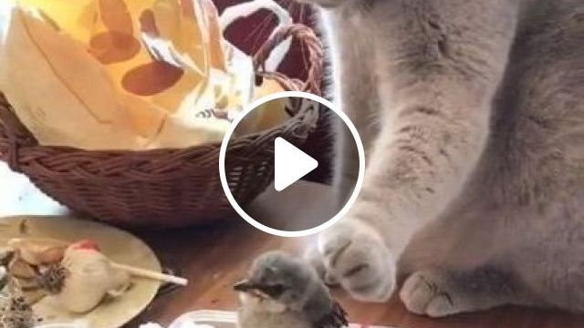 Honestly One Of Sweetest - Video & GIFs   animals & pets, cute animals, black cats, cat breeds