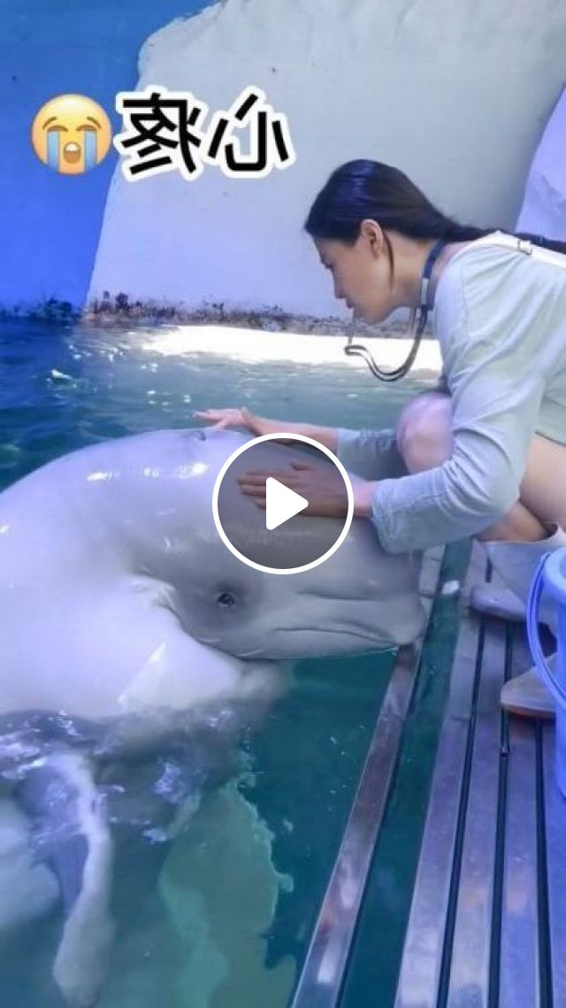 Intelligent White Dolphin - Video & GIFs | animals & pets, intelligent dolphins, caring animals, fashionable clothes