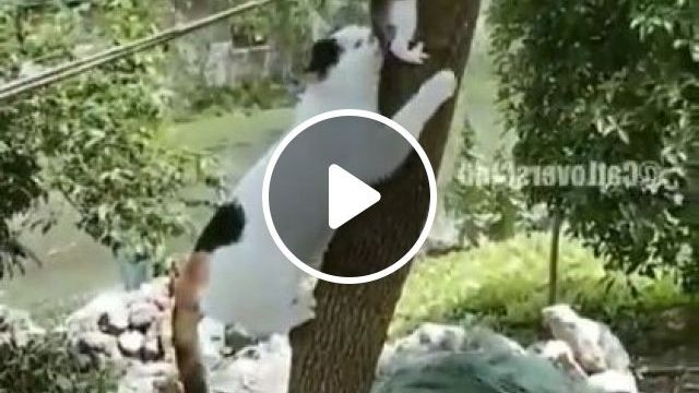 Wait A Minute, Son - Video & GIFs   animals & pets, cute cats, cat breeds, caring animals