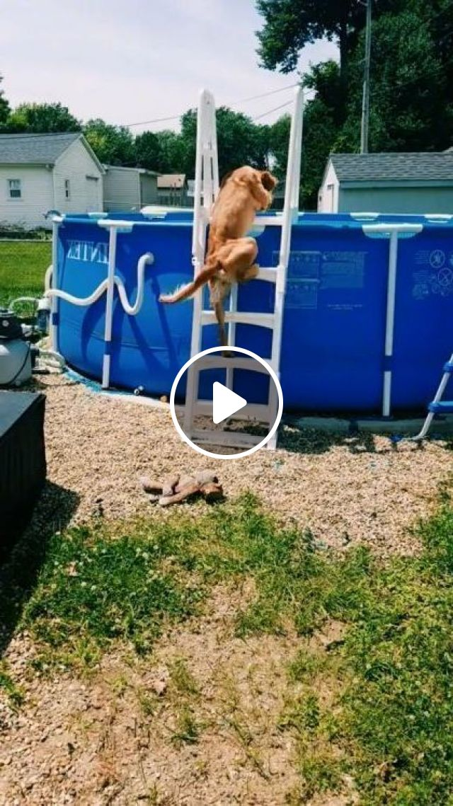 I Want To Swim With Puppy - Video & GIFs | animals & pets, cute dogs, dog breeds, swimming pools