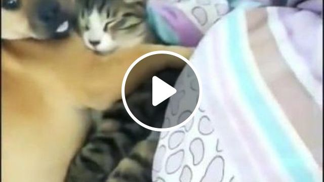 Warm Winter Blanket - Video & GIFs   animals & pets, cute cats, dog breeds, caring animals