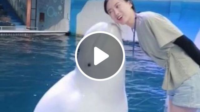 Dolphin is playing in  pool - Funny Videos - funnylax.com - animals & pets,smart dolphins,caring animals,swimming pool