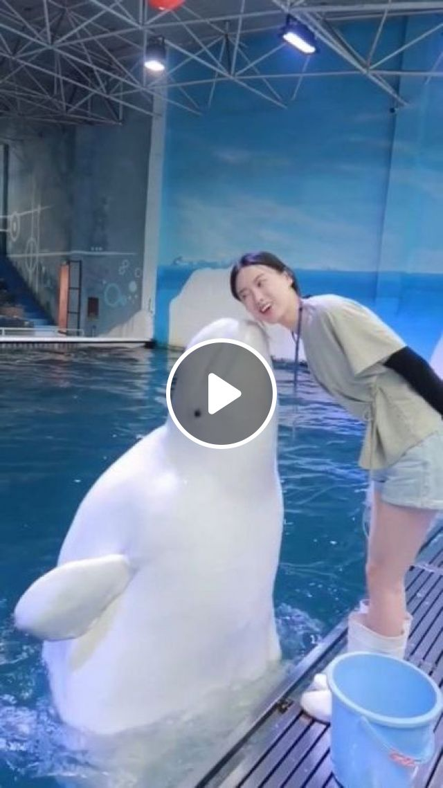 Dolphin Is Playing In Pool - Video & GIFs   animals & pets, smart dolphins, caring animals, swimming pool