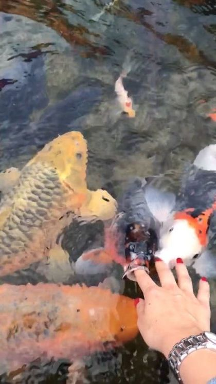 Clean water and beautiful fish