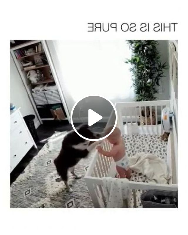 Baby Don't Cry, Dog Said - Video & GIFs | animals & pets, cute babies, baby clothes, dog breeds