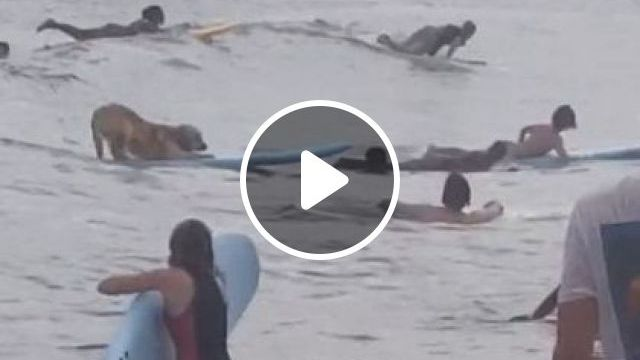 Surf Is Seriously Up - Video & GIFs | nature & travel, smart dogs, sea travel
