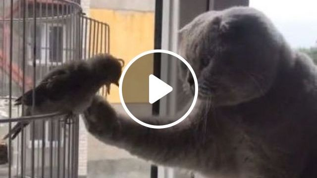 Oh Yeah Dad Real Nice - Video & GIFs | animals & pets, funny animals, caring animals