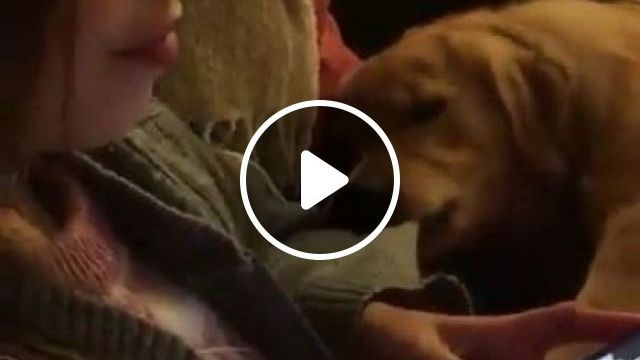 Please turn off  smartphone, I want to go to  park - Funny Videos - funnylax.com - animals & pets,cute dogs,dog breeds,smartphones,apartment interiors