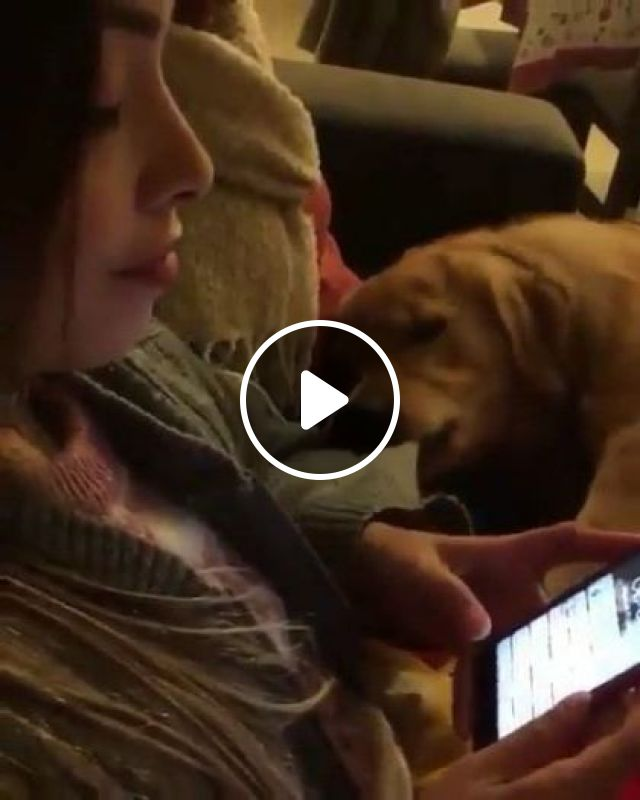 Please Turn Off Smartphone, I Want To Go To Park - Video & GIFs   animals & pets, cute dogs, dog breeds, smartphones, apartment interiors