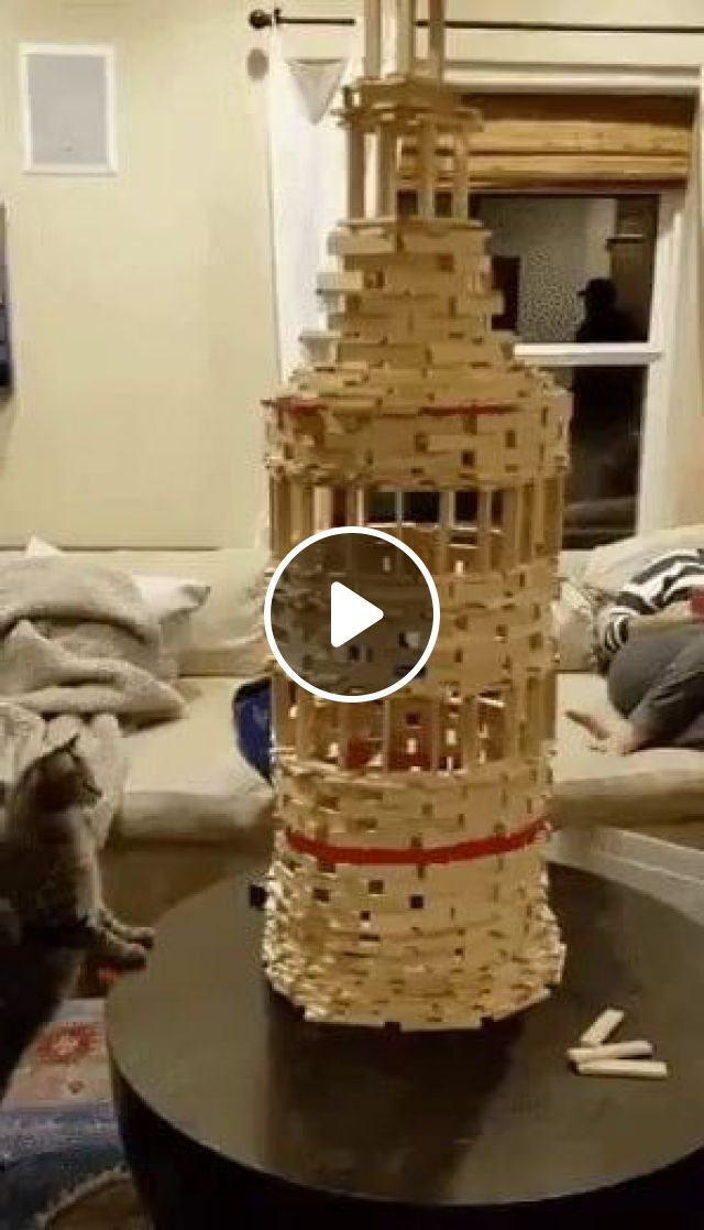 In Living Room, Every Smartphone User Takes A Picture Of Cat With Its Castle - Video & GIFs | Animals & Pets, cute cats, cat breeds, living room furniture