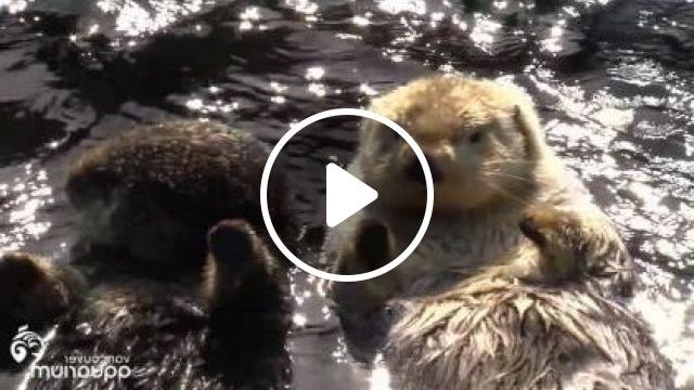 Otter Likes To Swim In River - Video & GIFs | Animals & Pets, cute otter, american animals