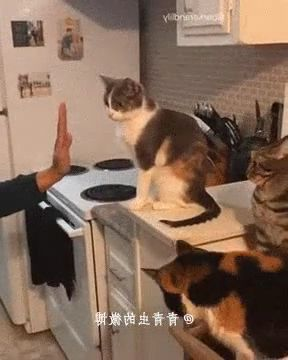 Smart cats in kitchen