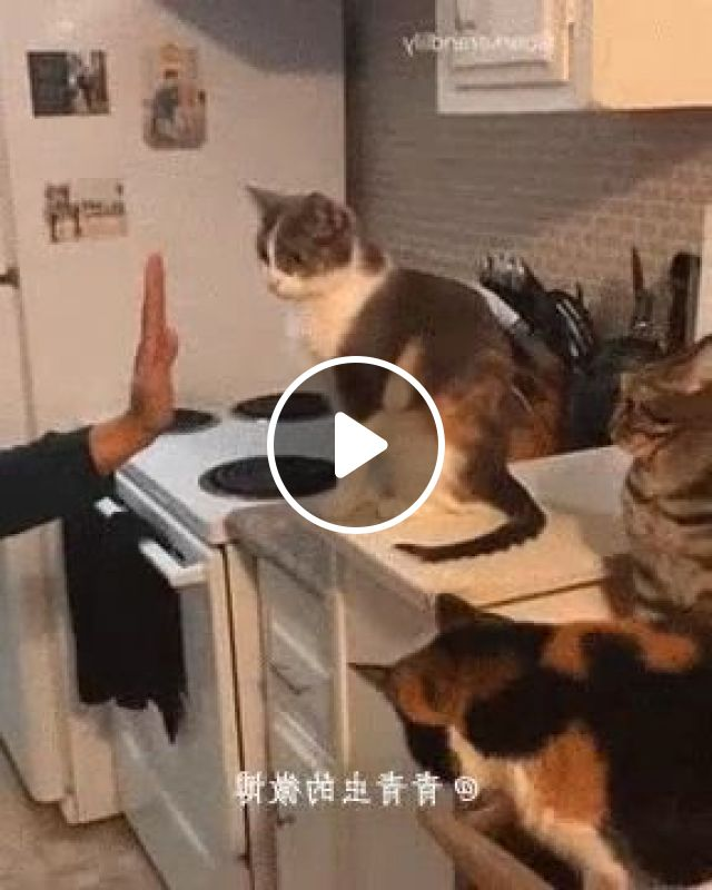Smart cats in kitchen, Animals & Pets, Smart Cats, funny cats, kitchen tools, kitchen furniture, delicious food, kitchen appliances