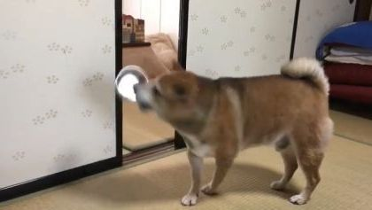 In living room, dog is not happy when there is no food