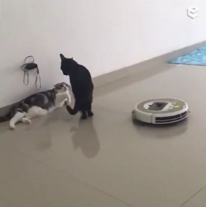 Smart cat knows how to control automatic cleaning machine in living room