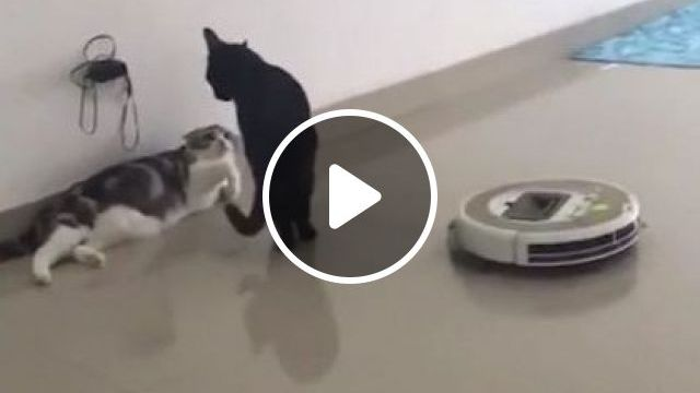 Smart cat knows how to control automatic cleaning machine in living room, Animals & Pets, black cats, cat breeds, smart cats, automatic home cleaning machines, technology electronics, living room furniture