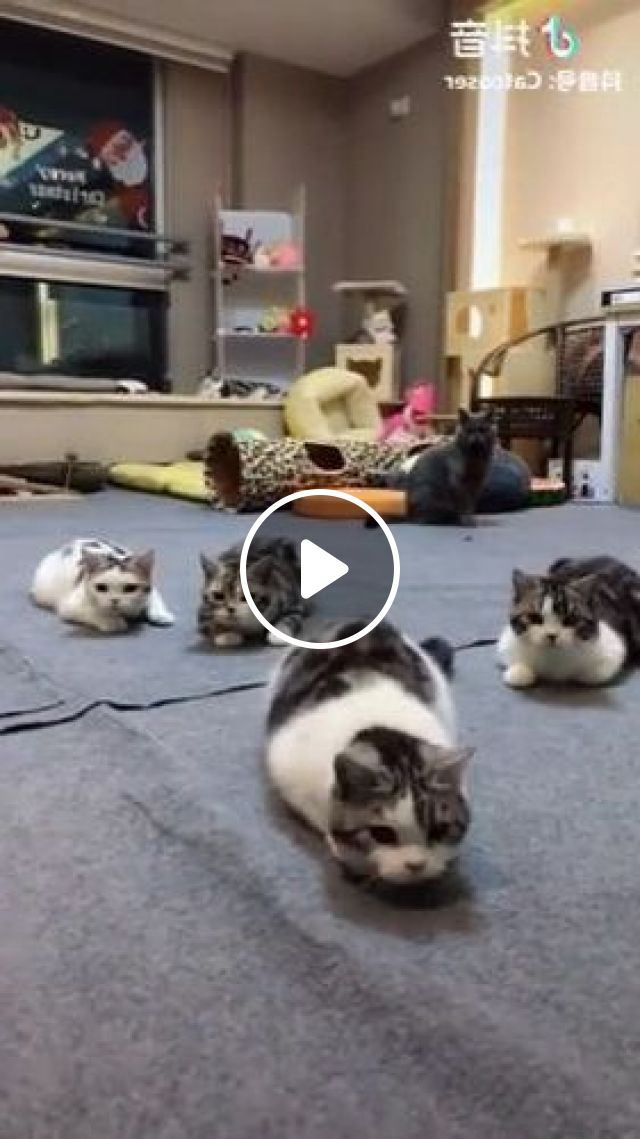 Cats Are Looking For Something In Living Room - Video & GIFs | Animals & Pets, cute kittens, cat breeds, furniture living room
