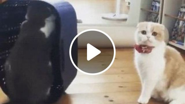 Cats like to play with shopping bags inside grocery store, Animals & Pets, cute cats, cat breeds, grocery stores, premium wooden floors, shopping baskets, plastic goods