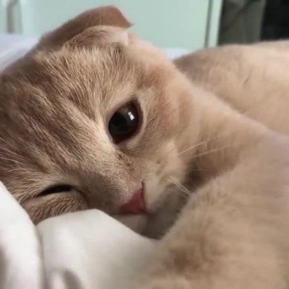 Cats just want to sleep on a soft bed