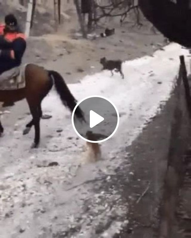 Tourists riding horses, Animals & Pets, mountain travel, male clothes, horse riding, funny dogs