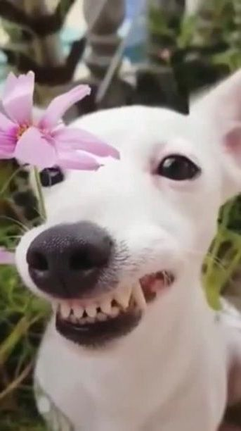 Happy dog with flowers