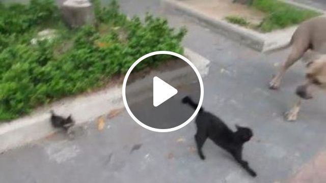 Cat mother protecting kittens against dog on the street, Animals & Pets, mother cats, black cats, cute kittens, smart dogs, British streets, dog breeds