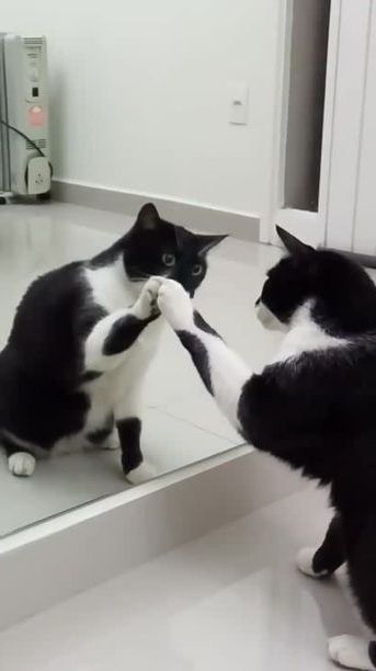 cat was surprised to see it in mirror of fashion store