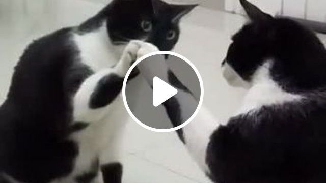 cat was surprised to see it in mirror of fashion store, Animals & Pets, black cats, cute cats, big mirrors, fashion stores