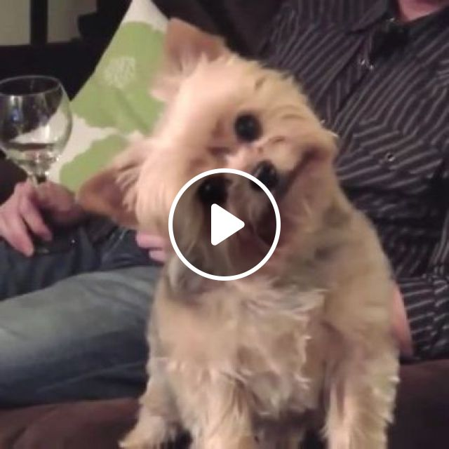 Dog Was Surprised To See Cat Move In Living Room - Video & GIFs   Animals & Pets, cute dogs, dog breeds, smart cats, interior living room, luxury apartments