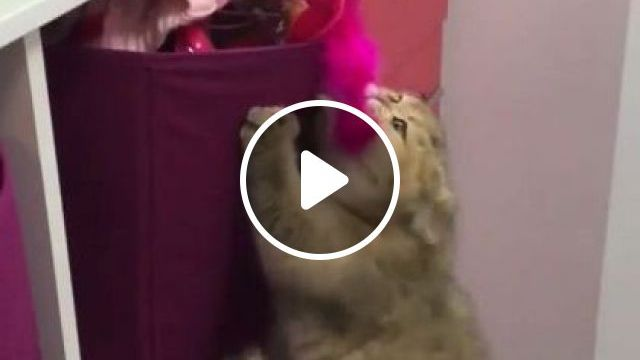 Cats Really Like Luxurious Clothes And Expensive Bags - Video & GIFs   Animals & Pets, lovely cats, funny cats, chic fashion, expensive bags, luxury apartments