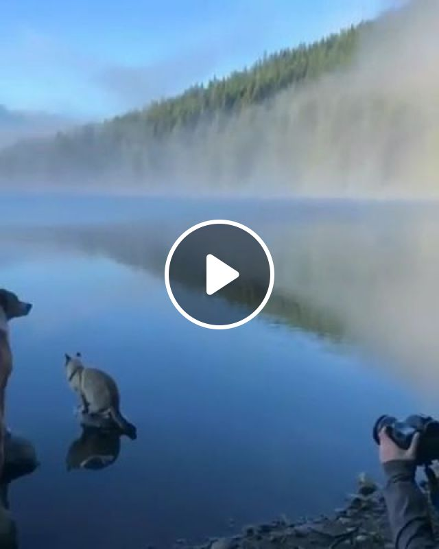 Girl Taking Pictures Of Dog And Cat On The Lake Is Very Beautiful - Video & GIFs | Animals & Pets, Lovely Girls, Girls clothes, photography, cameras, luxury cameras, cute dogs, cute cats, beautiful lakes