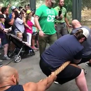 men pulled strings with tigers in zoo