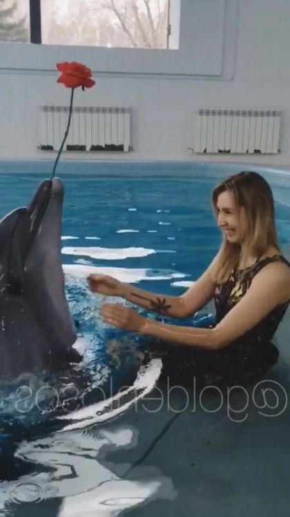 Dolphins play with tourists on the sea