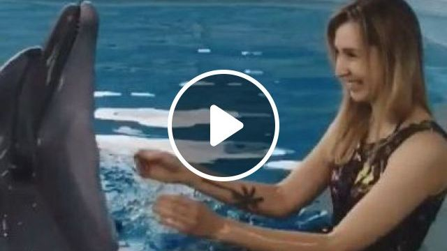 Dolphins Play With Tourists On The Sea - Video & GIFs | Nature & Travel, whales, tourists, excited, animals