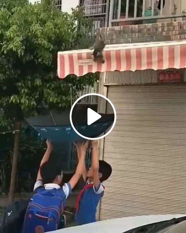 Boys Saved Kitten On The Roof Of Phone Store With An Umbrella - Video & GIFs | Animals & Pets, lovely cats, cat breeds, phone shops, animal care, rain umbrellas