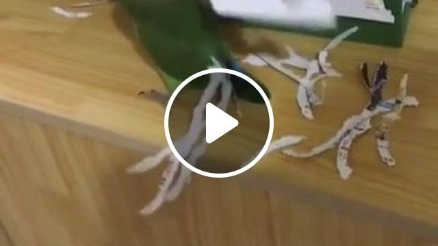 In living room, a bird tore paper fibers and placed them on its fur, Animals & Pets, living room, luxurious furniture, colorful birds, cute birds