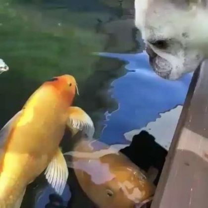 puppy likes to play with fish