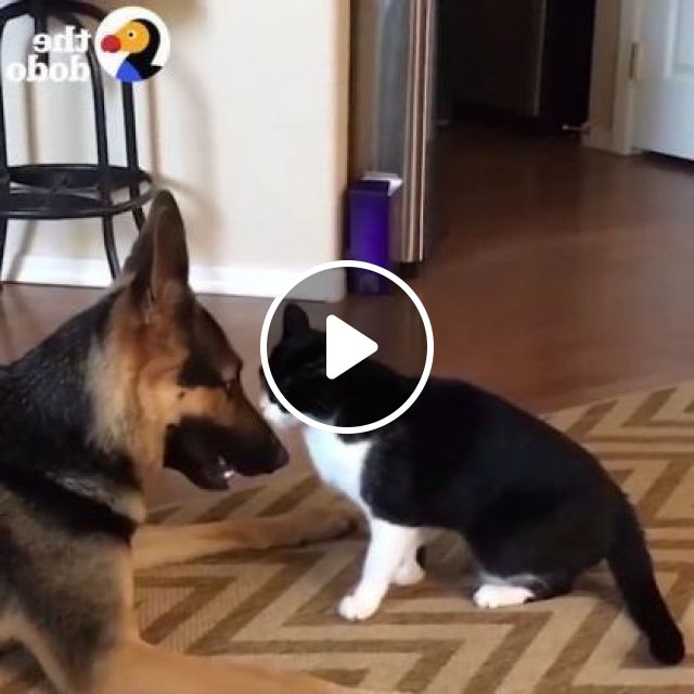 Dog and cat are friends, Animals & Pets, smart dogs, cute cats, breed dogs, smart cats, friendly animals, luxury apartments