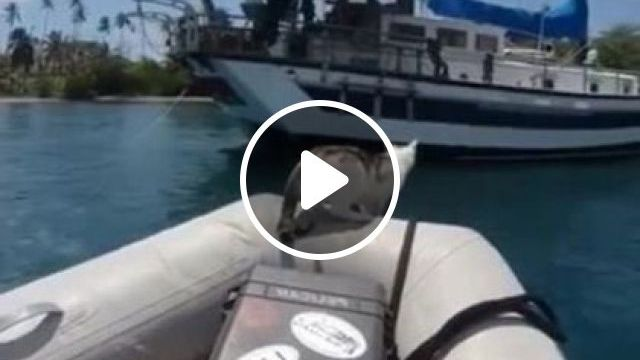 cat on the travel boat goes everywhere 9gag reddit - Funny Videos - funnylax.com - Animals & Pets, white cats, high jumps, boat travel, sea travel, camera recording