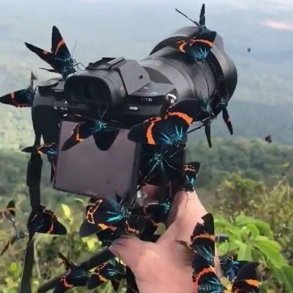 Travel to natural places, butterflies on the camera