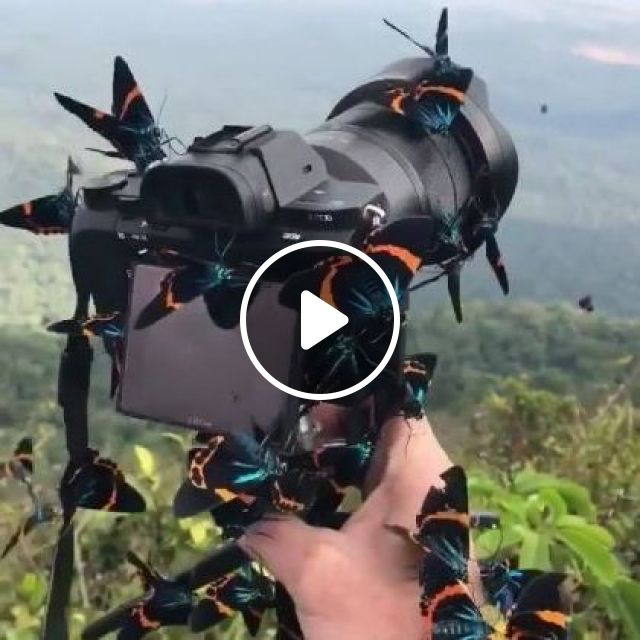 Travel to natural places, butterflies on the camera, Nature & Travel, camera technology, high definition, Japan travel, beautiful scenery, multicolored butterflies
