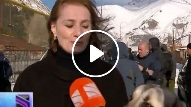 Woman And Dog Are Televised Live On Television - Video & GIFs   Animals & Pets, funny dogs, dog breeds, ladies clothes, video recording, live video, luxury cameras, high definition