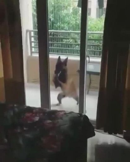 Dog dancing at apartment balcony