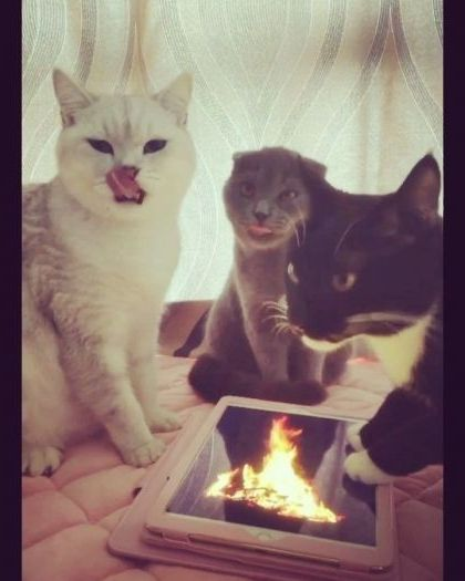 Yeah we feel warm - Funny Videos - funnylax.com - cat,fire,adorable
