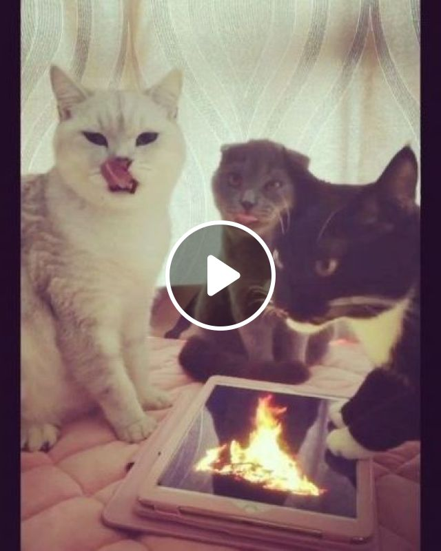 Yeah We Feel Warm - Video & GIFs | cat, fire, adorable